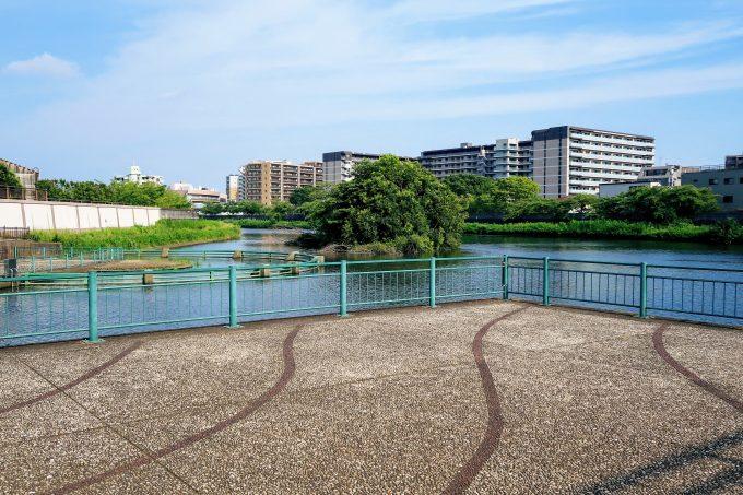 舟渡水辺公園全景の池